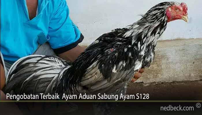 Pengobatan Terbaik Ayam Aduan Sabung Ayam S128
